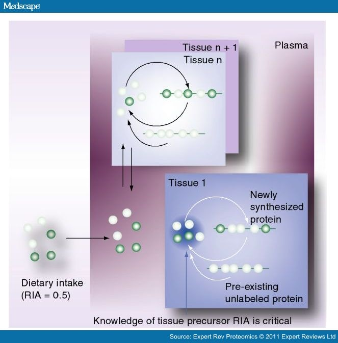 Proteomics Moves From Expression to Turnover