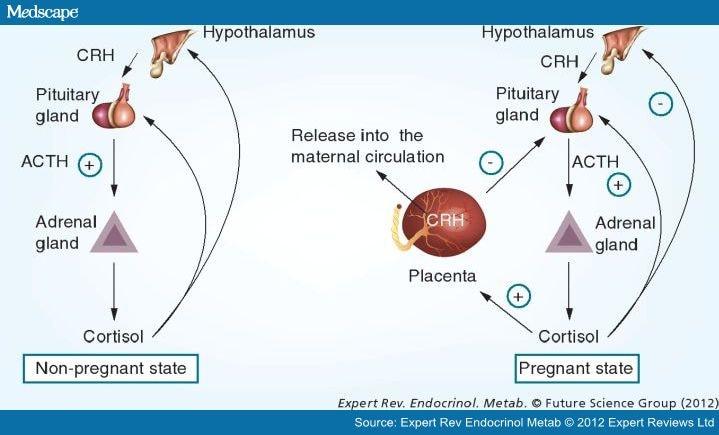 neurobehavioral risk from fetal exposure to stress hormones