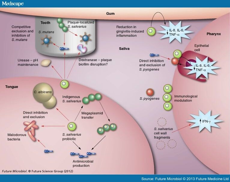 Developing Oral Probiotics From Streptococcus Salivarius