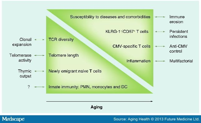 The Immune System In The Elderly