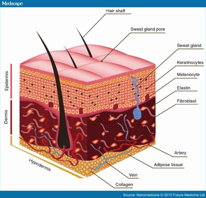 Biofabrication Strategies For Skin Regeneration And Repair