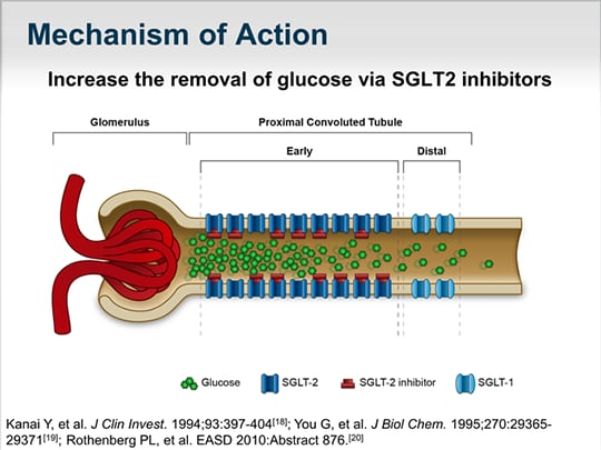 The Kidney and Glucose Homeostasis: Why Target SGLT2 in