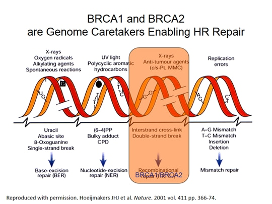 PARP Inhibition for BRCA1/2 Mutation-Associated and Triple Negative