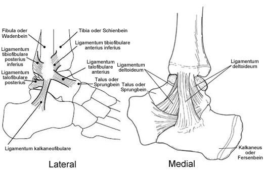Verletzungen des Sprunggelenks: Slideshow   Medscape