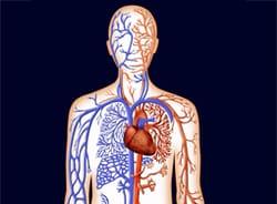 daño nervioso que causa disfunción eréctil