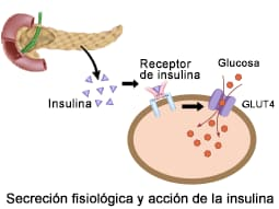 diabetes primera fase insulina