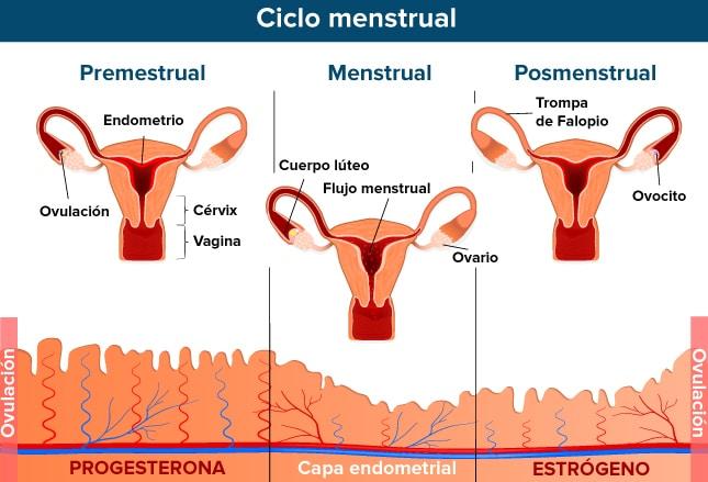 quiste ovarico cuerpo luteo