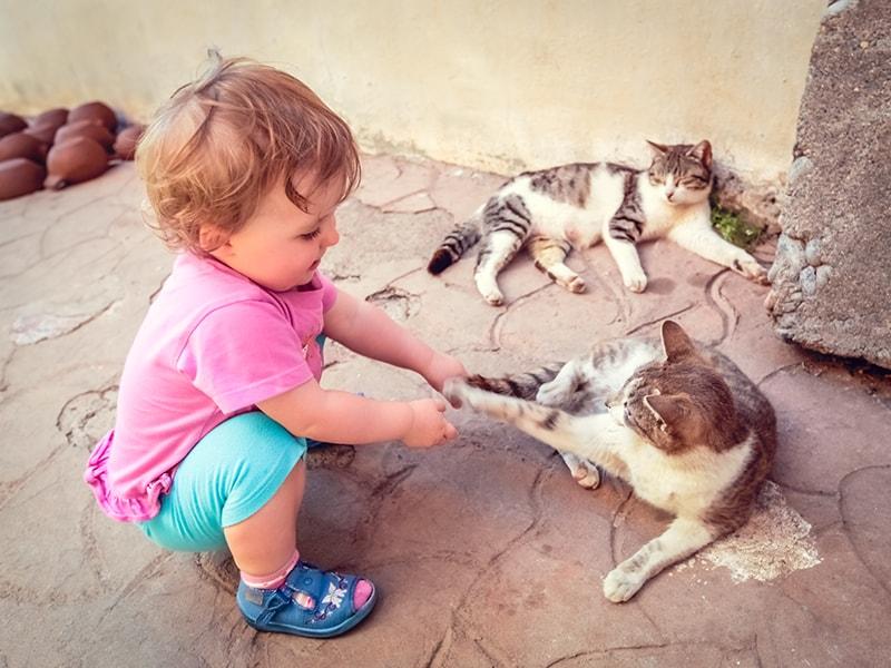 diabéticos felinos en el foro fdmbrands