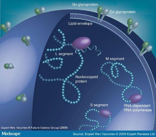 recent approaches in hantavirus vaccine development