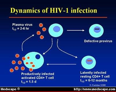 Hiv Pathogenesis And Viral Markers