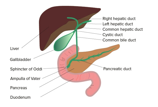 Gallbladder, Bile Duct, and Ampullary Cancer: Shaking the Biliary Tree