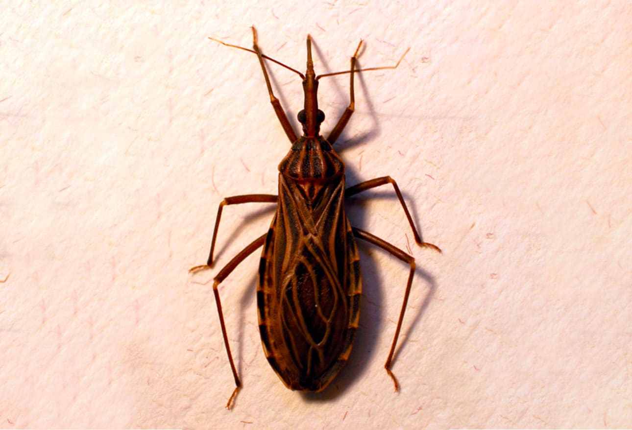 Ring Shaped Bug Bite