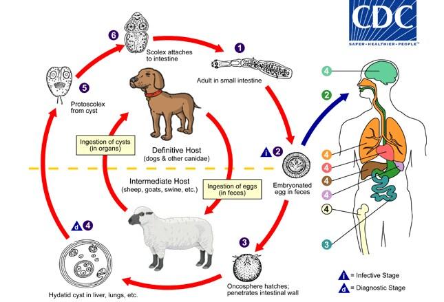 12 Common Intestinal Parasites