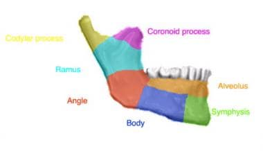 The anatomic regions of the mandible.