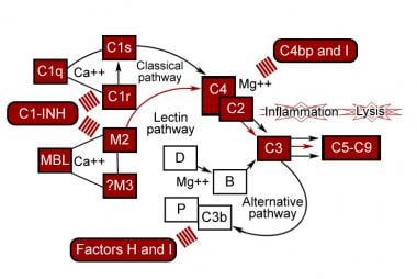 Control proteins of the complement pathways.