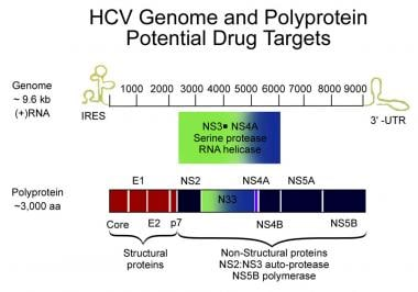 Hepatitis C viral genome. Courtesy of Hepatitis Re