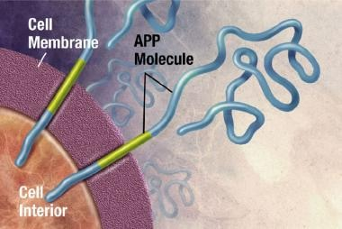APP is associated with the cell membrane, the thin