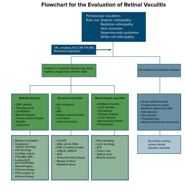 Flowchart for the evaluation of retinal vasculitis