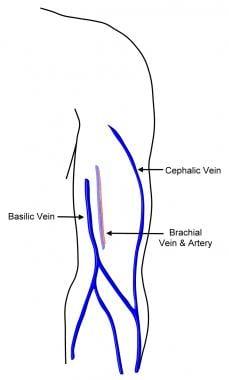 Venous anatomy upper extremity
