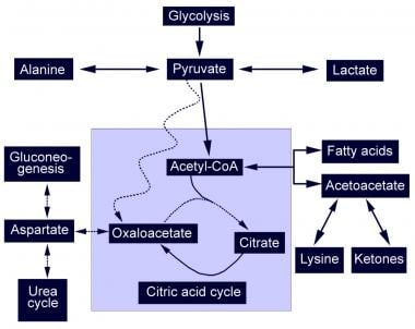 Diagrammatic representation of the citric acid cyc