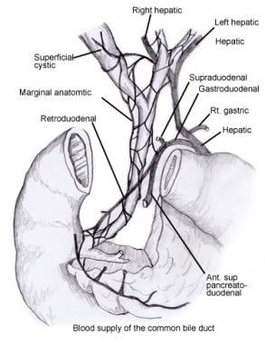 Common bile duct blood supply.