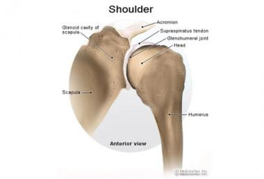 Normal shoulder.