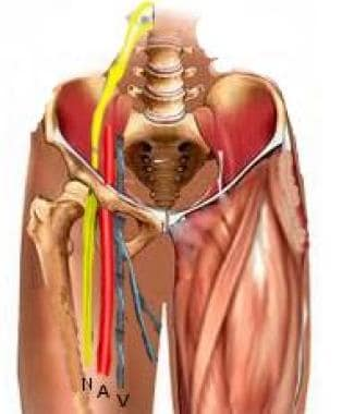 Location of femoral artery in relation to the nerv