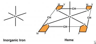 Both nonheme iron and heme iron have 6 coordinatin