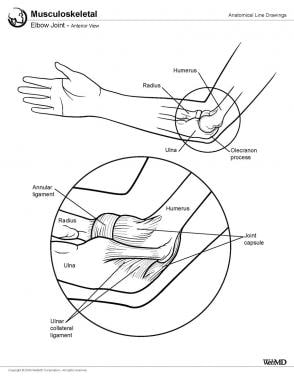 Elbow joint, anterior view.