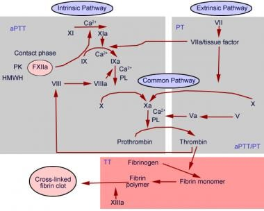 Prothrombin Time Chart