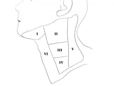 Lateral cervical lymph nodes I-VI. Level VII nodes