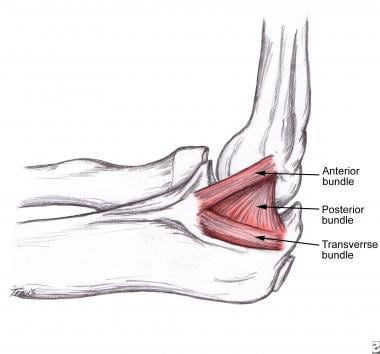 Schematic diagram of medial collateral ligament of