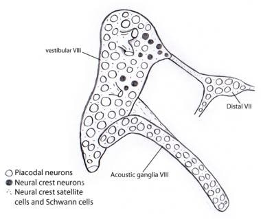 Illustration showing that almost all neurons in th