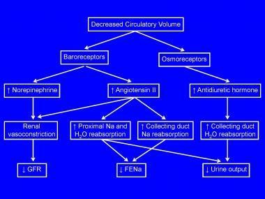 Oliguria: Background, Etiology, Epidemiology
