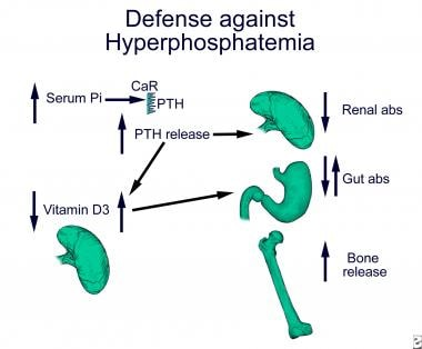 Hyperphosphatemia inhibits 1-alpha hydroxylase in
