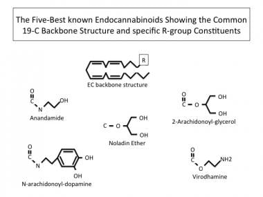 The five best-known endocannabinoids showing the c