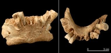 The earliest known human fossil, 1.8 million years
