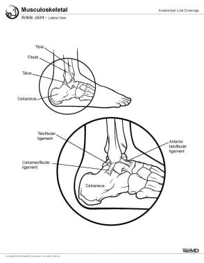 Ankle joint, lateral view.
