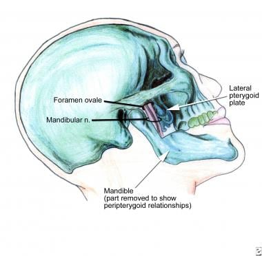 Pertinent anatomy with regard to the mandibular bl