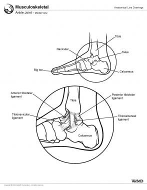 Ankle joint, medial view.