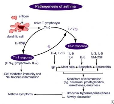 Figure depicting antigen presentation by the dendr