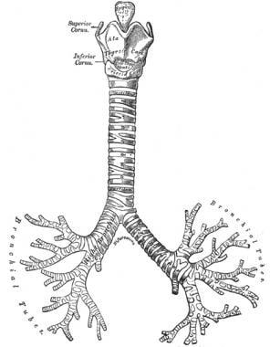 Bronchial Anatomy: Overview, Gross Anatomy, Microscopic Anatomy