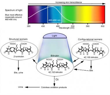 Mechanism of phototherapy: Blue-green light in the