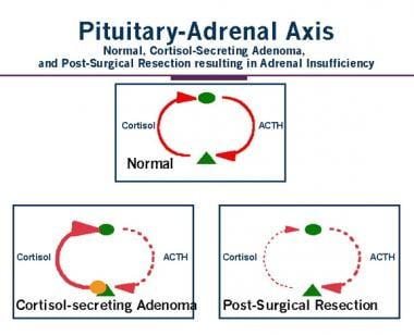 Pituitary-adrenal axis and cortisol-secreting adre