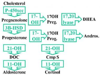 C-17α-hydroxylase is necessary to convert pregneno