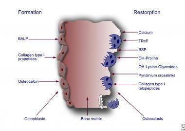 Mechanisms and mediators of bone metastasis.