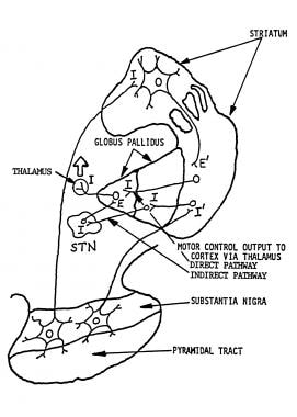 Pallidal outflow pathways from basal ganglia to th