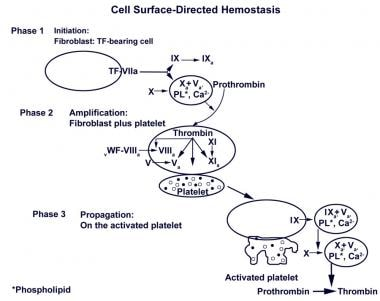Cell surfaced–directed hemostasis. Initially, a sm