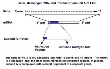 Gene, messenger RNA, and protein for subunit A of