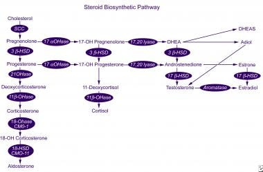 Steroid biosynthetic pathway.